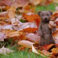 Gogeous little bear by Inspiring Yarns